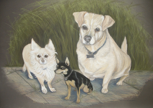 pet portrait on sanded pastel paper by Cindy Guare, Tucson, Az